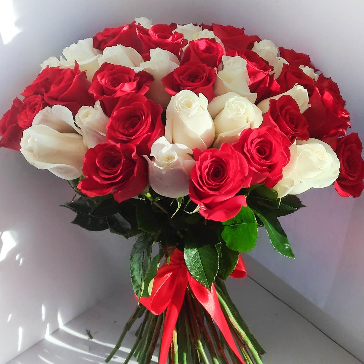 бело-красные розы фото огромные