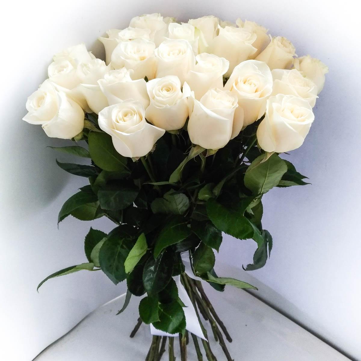 эти самые красивые букеты белых роз в картинках бриллианты издавна считались