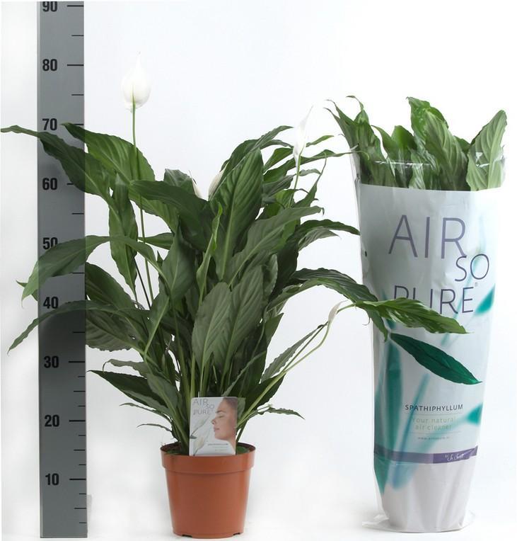 Горшечные растения уход названия и фото