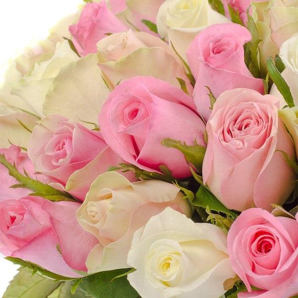 С днем рождения женщине открытки с розами белыми или розовые