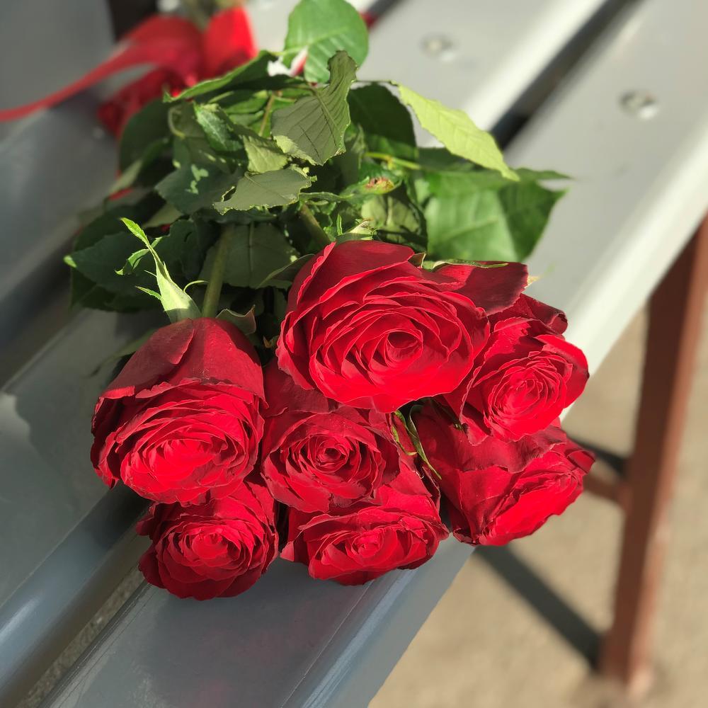 Фото роз фото роз