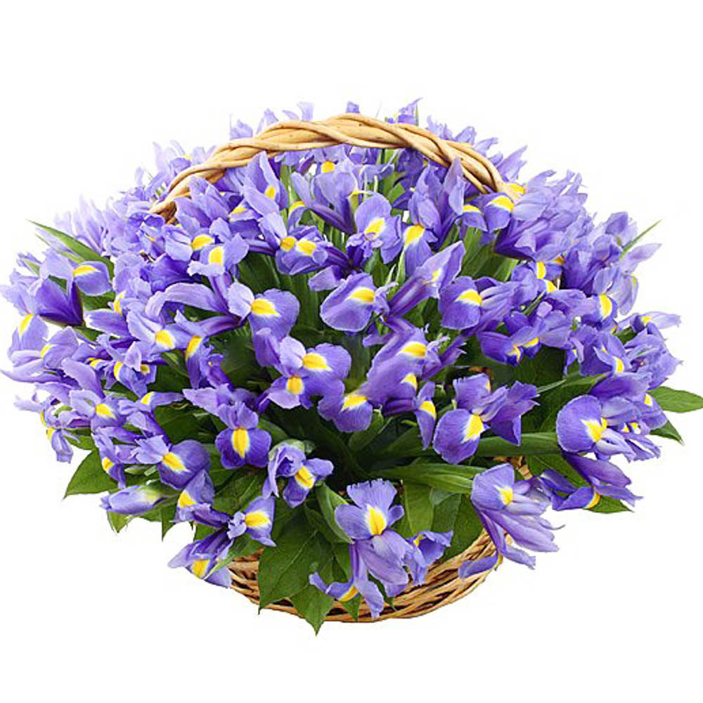 Цветов, заказ цветов синие ирисы